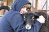 Schafsfreundschaft